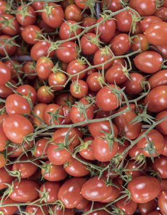 Pomodori | Amato
