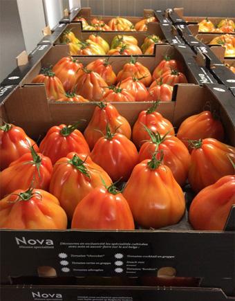 Pomodori cuore di bue | Aprile Bartolomeo